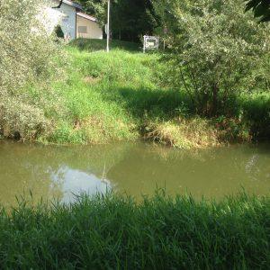 Rotach Wasserstau kurz vor der Mündung
