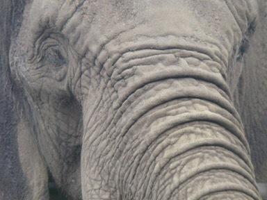 Keine Wildtiere in Wanderzirkussen - worum geht es eigentlich?